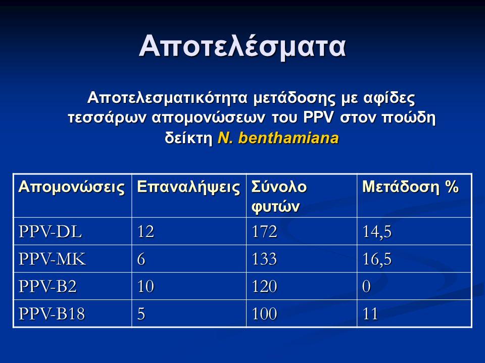 Αποτελέσματα Αποτελεσματικότητα μετάδοσης με αφίδες τεσσάρων απομονώσεων του PPV στον ποώδη δείκτη N.
