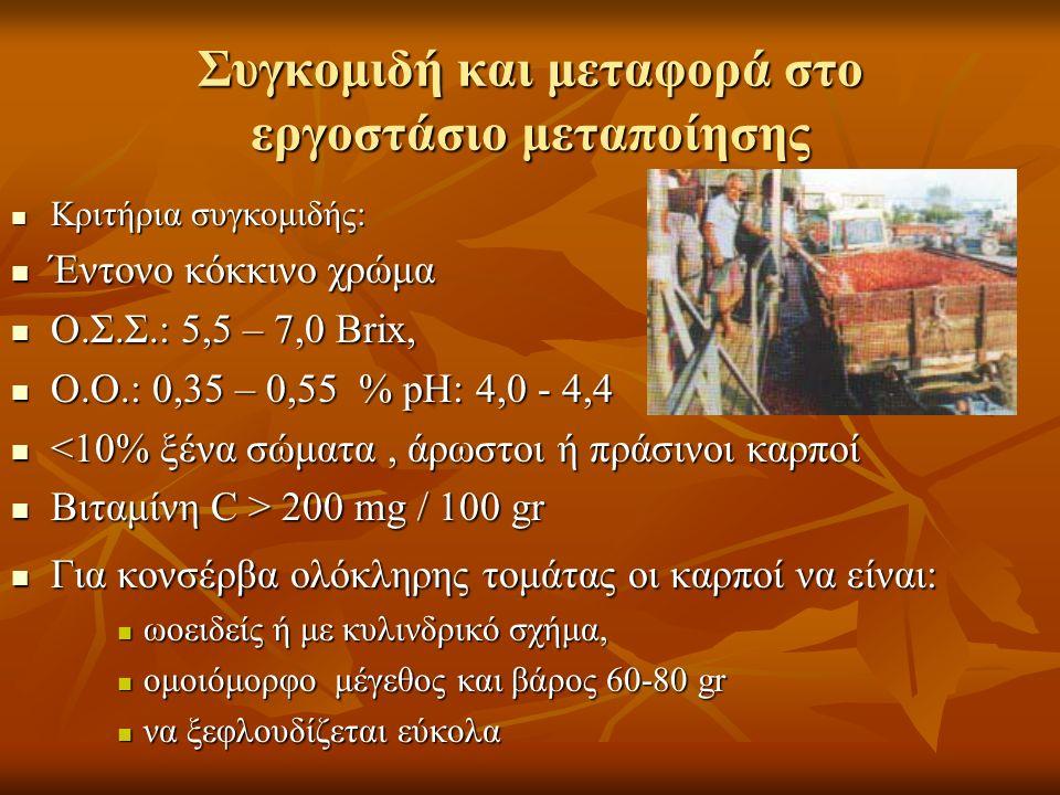 Συγκομιδή και μεταφορά στο εργοστάσιο μεταποίησης Κριτήρια συγκομιδής: Κριτήρια συγκομιδής: Έντονο κόκκινο χρώμα Έντονο κόκκινο χρώμα Ο.Σ.Σ.: 5,5 – 7,