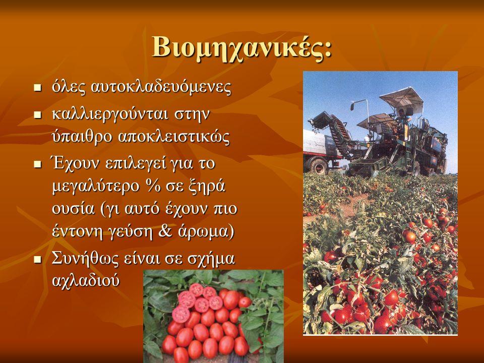 Βιομηχανικές: όλες αυτοκλαδευόμενες όλες αυτοκλαδευόμενες καλλιεργούνται στην ύπαιθρο αποκλειστικώς καλλιεργούνται στην ύπαιθρο αποκλειστικώς Έχουν επιλεγεί για το μεγαλύτερο % σε ξηρά ουσία (γι αυτό έχουν πιο έντονη γεύση & άρωμα) Έχουν επιλεγεί για το μεγαλύτερο % σε ξηρά ουσία (γι αυτό έχουν πιο έντονη γεύση & άρωμα) Συνήθως είναι σε σχήμα αχλαδιού Συνήθως είναι σε σχήμα αχλαδιού