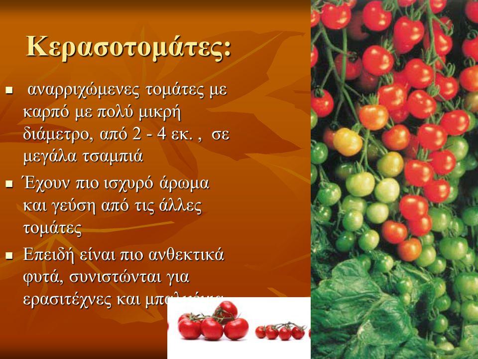 Κερασοτομάτες: αναρριχώμενες τομάτες με καρπό με πολύ μικρή διάμετρο, από 2 - 4 εκ., σε μεγάλα τσαμπιά αναρριχώμενες τομάτες με καρπό με πολύ μικρή διάμετρο, από 2 - 4 εκ., σε μεγάλα τσαμπιά Έχουν πιο ισχυρό άρωμα και γεύση από τις άλλες τομάτες Έχουν πιο ισχυρό άρωμα και γεύση από τις άλλες τομάτες Επειδή είναι πιο ανθεκτικά φυτά, συνιστώνται για ερασιτέχνες και μπαλκόνια Επειδή είναι πιο ανθεκτικά φυτά, συνιστώνται για ερασιτέχνες και μπαλκόνια