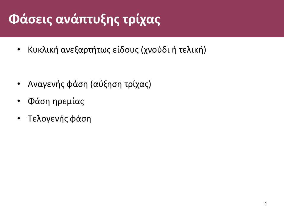 Φάσεις ανάπτυξης τρίχας Κυκλική ανεξαρτήτως είδους (χνούδι ή τελική) Αναγενής φάση (αύξηση τρίχας) Φάση ηρεμίας Τελογενής φάση 4