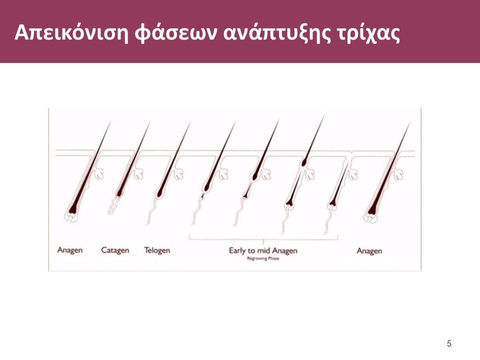 Απεικόνιση φάσεων ανάπτυξης τρίχας 5