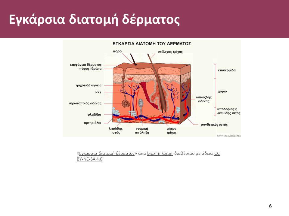 Εγκάρσια διατομή δέρματος 6 «Εγκάρσια διατομή δέρματος» από bioximikos.gr διαθέσιμο με άδεια CC BY-NC-SA 4.0Εγκάρσια διατομή δέρματοςbioximikos.grCC BY-NC-SA 4.0