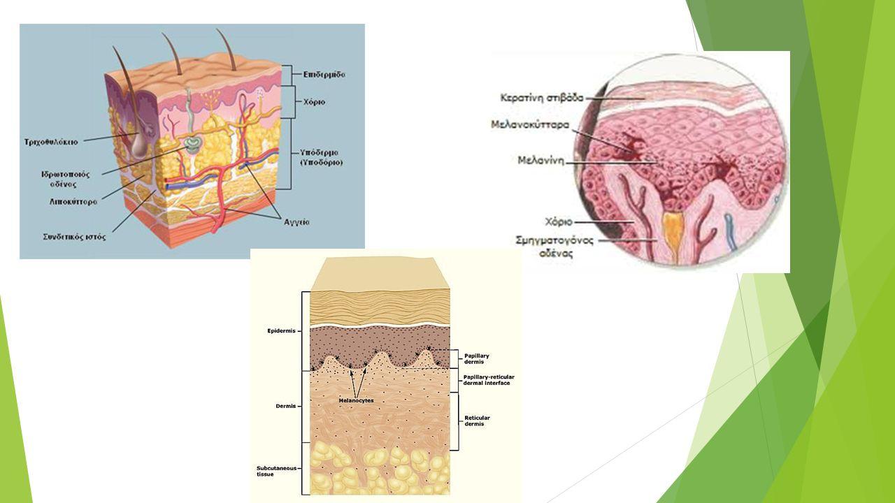 Lasers  Όγκοι Δέρματος  Φωτογήρανση  Ατροφικές Ουλές  Ευρυαγγείες, Αιμαγγειωμάτα  Τατουάζ  Αποτρίχωση