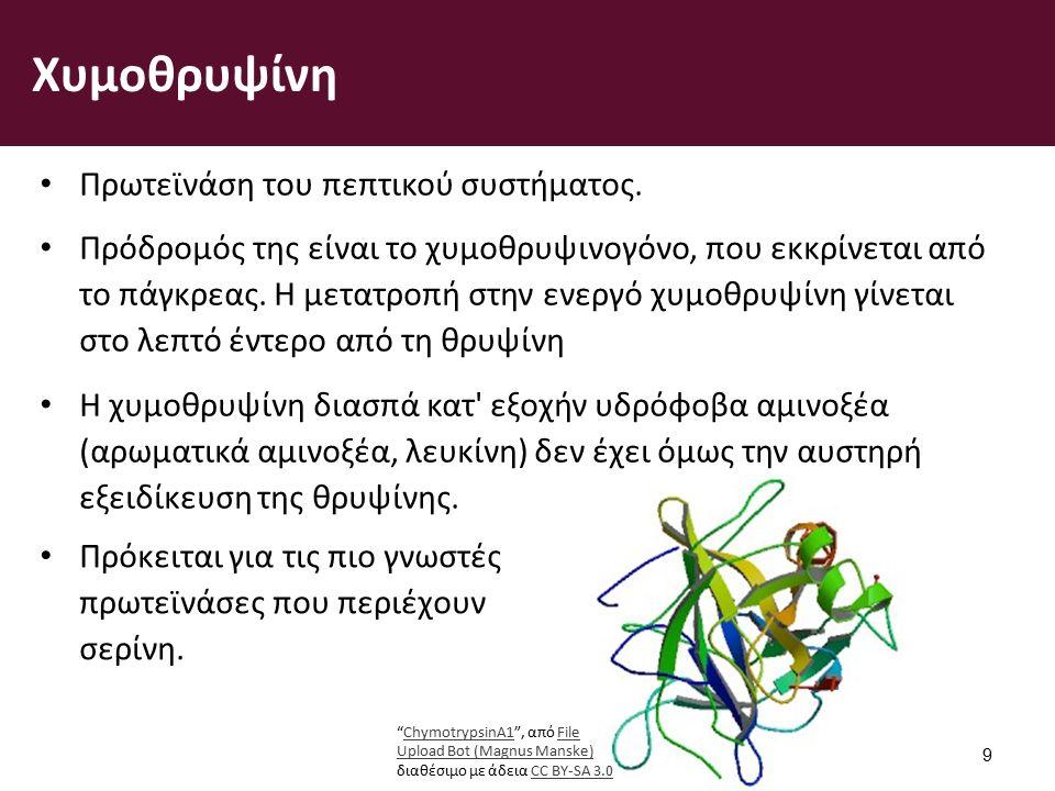 Χυμοθρυψίνη Πρωτεϊνάση του πεπτικού συστήματος.