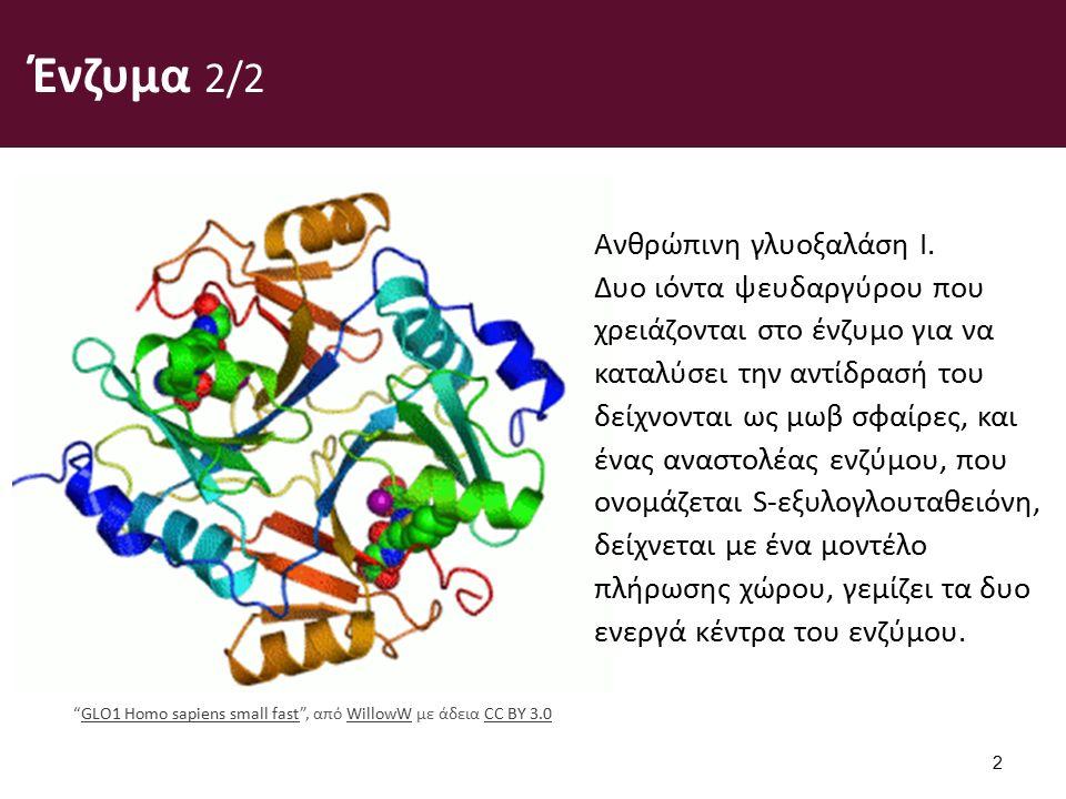 Ένζυμα 2/2 2 Ανθρώπινη γλυοξαλάση I.