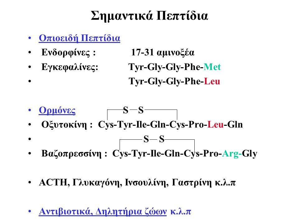 Σημαντικά Πεπτίδια Οπιοειδή Πεπτίδια Ενδορφίνες : 17-31 αμινοξέα Εγκεφαλίνες: Tyr-Gly-Gly-Phe-Met Tyr-Gly-Gly-Phe-Leu Oρμόνες S S Οξυτοκίνη : Cys-Tyr-Ile-Gln-Cys-Pro-Leu-Gln S S Bαζοπρεσσίνη : Cys-Tyr-Ile-Gln-Cys-Pro-Arg-Gly ACTH, Γλυκαγόνη, Ινσουλίνη, Γαστρίνη κ.λ.π Αντιβιοτικά, Δηλητήρια ζώων κ.λ.π