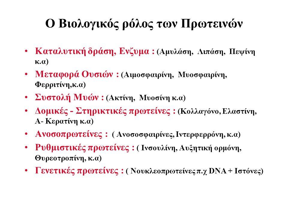 Ο Βιολογικός ρόλος των Πρωτεινών Καταλυτική δράση, Ενζυμα : (Αμυλάση, Λιπάση, Πεψίνη κ.α) Μεταφορά Ουσιών : (Αιμοσφαιρίνη, Μυοσφαιρίνη, Φερριτίνη,κ.α) Συστολή Μυών : (Ακτίνη, Μυοσίνη κ.α) Δομικές - Στηρικτικές πρωτείνες : (Κολλαγόνο, Ελαστίνη, Α- Κερατίνη κ.α) Ανοσοπρωτείνες : ( Ανοσοσφαιρίνες, Ιντερφερρόνη, κ.α) Ρυθμιστικές πρωτείνες : ( Ινσουλίνη, Αυξητική ορμόνη, Θυρεοτροπίνη, κ.α) Γενετικές πρωτείνες : ( Νουκλεοπρωτείνες π.χ DNA + Iστόνες)