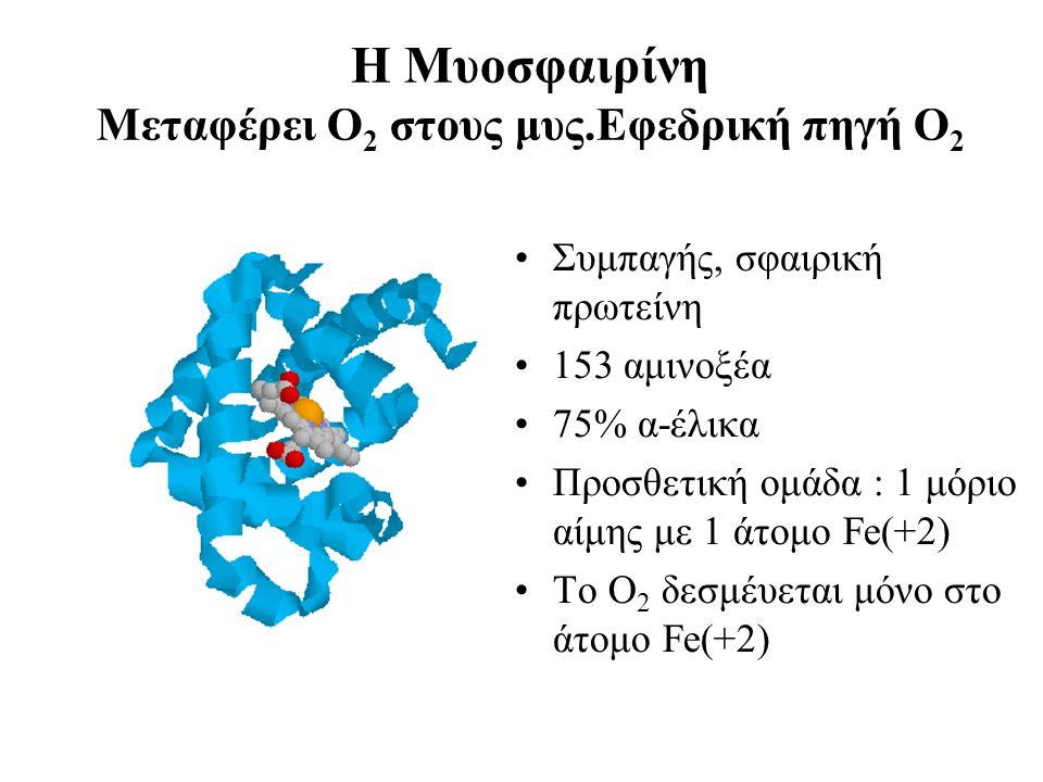 Η Μυοσφαιρίνη Μεταφέρει Ο 2 στους μυς.Εφεδρική πηγή Ο 2 Συμπαγής, σφαιρική πρωτείνη 153 αμινοξέα 75% α-έλικα Προσθετική ομάδα : 1 μόριο αίμης με 1 άτομο Fe(+2) Το Ο 2 δεσμέυεται μόνο στο άτομο Fe(+2)