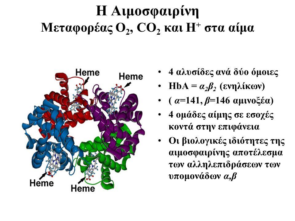 H Aιμοσφαιρίνη Μεταφορέας Ο 2, CO 2 και Η + στα αίμα 4 αλυσίδες ανά δύο όμοιες HbA = α 2 β 2 (ενηλίκων) ( α=141, β=146 αμινοξέα) 4 ομάδες αίμης σε εσοχές κοντά στην επιφάνεια Οι βιολογικές ιδιότητες της αιμοσφαιρίνης αποτέλεσμα των αλληλεπιδράσεων των υπομονάδων α,β