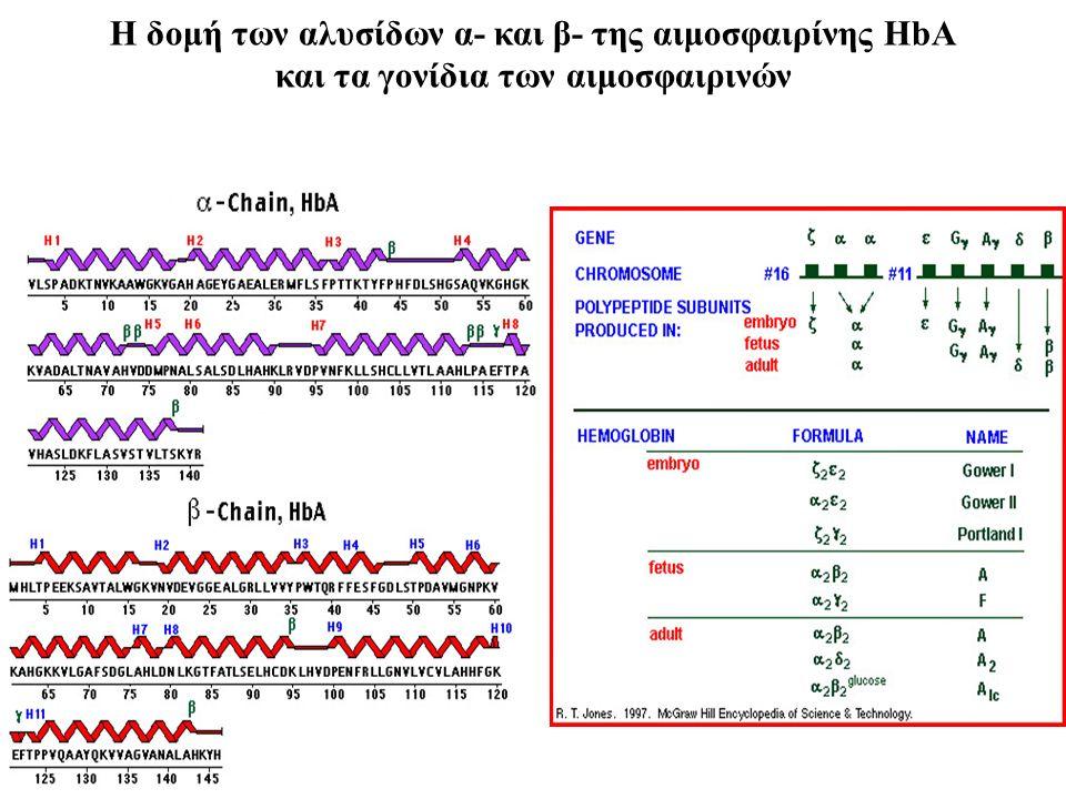 Η δομή των αλυσίδων α- και β- της αιμοσφαιρίνης HbA και τα γονίδια των αιμοσφαιρινών