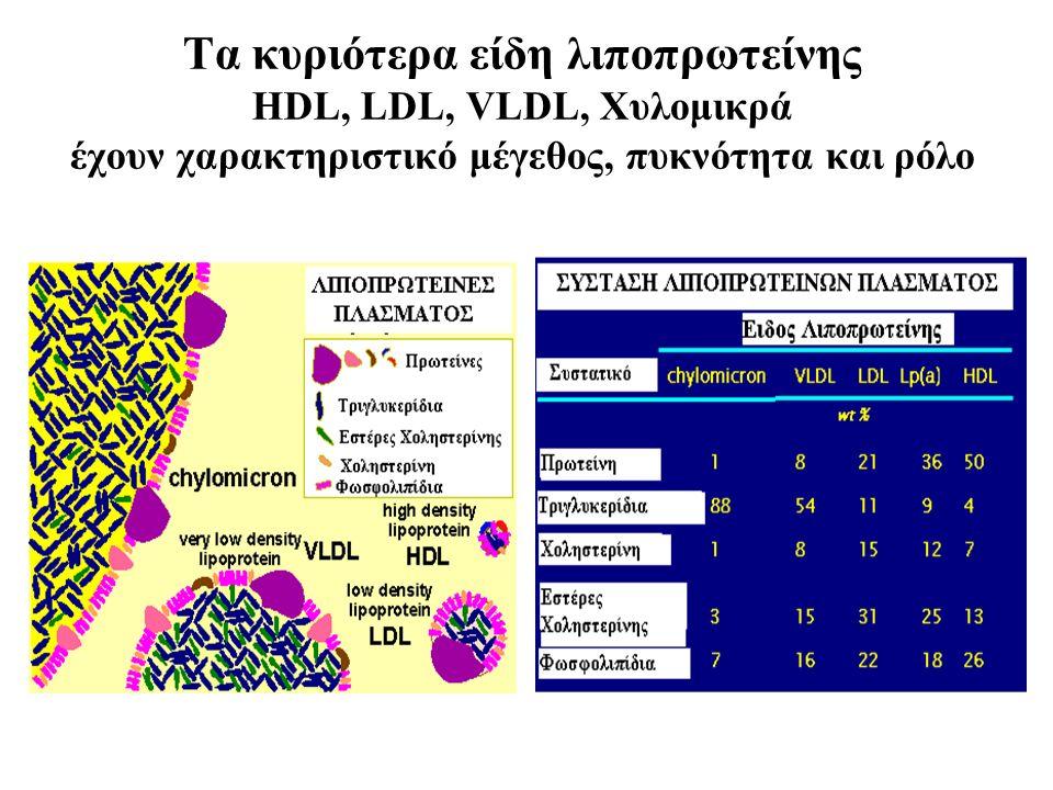 Τα κυριότερα είδη λιποπρωτείνης HDL, LDL, VLDL, Χυλομικρά έχουν χαρακτηριστικό μέγεθος, πυκνότητα και ρόλο