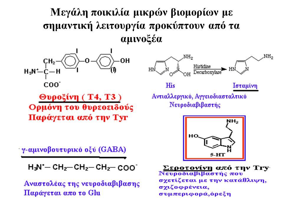Μεγάλη ποικιλία μικρών βιομορίων με σημαντική λειτουργία προκύπτουν από τα αμινοξέα