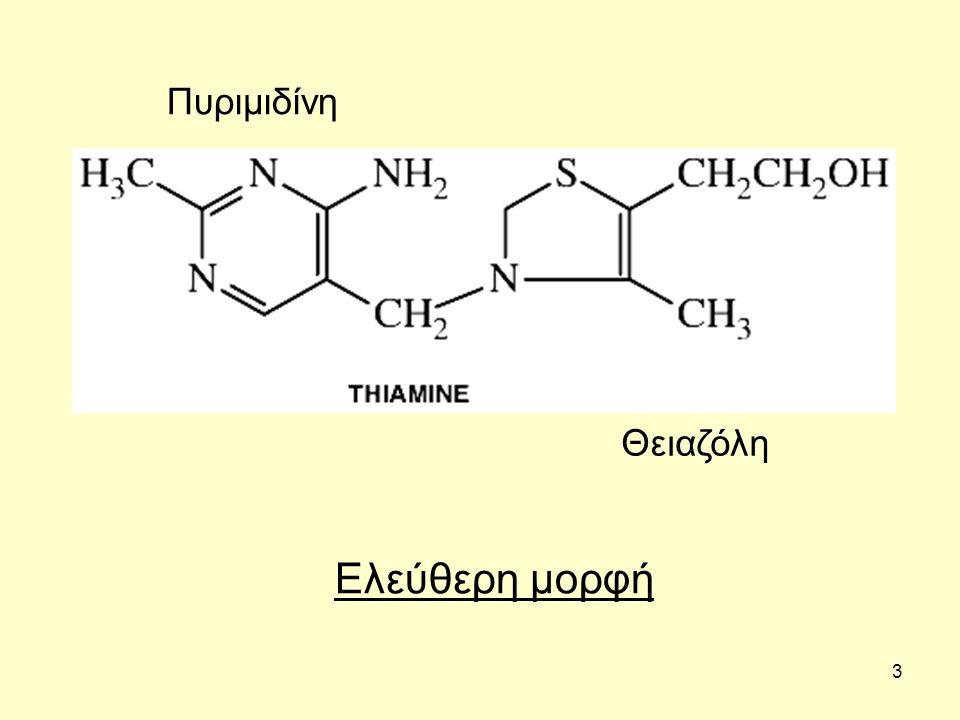 4 Λειτουργίες Λειτουργεί κυρίως ως συνένζυμο.