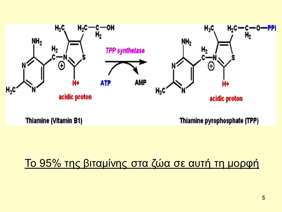 6 Συνένζυμο Η Πυροσταφυλική Δεϋδρογενάση, η α- Κετογλουταρική Δεϋδρογενάση, και η Δεϋδρογενάση των Κετοξέων Διακλαδισμένης Αλυσίδας (BCKA), αποτελούν συγκροτήματα ενζύμων που βρίσκονται στα μιτοχόνδρια.