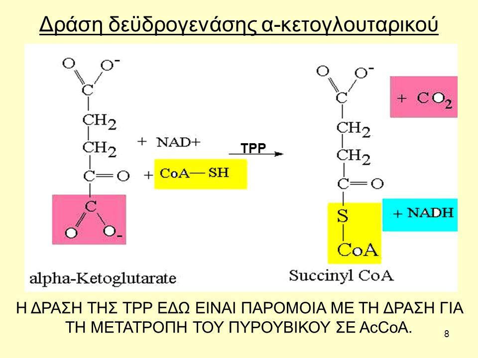 9 Τρανσκετολάση Η τρανσκετολάση καταλύει σημαντικές αντιδράσεις σε άλλο μεταβολικό μονοπάτι γνωστό ως των φωσφορικών πεντοζών.