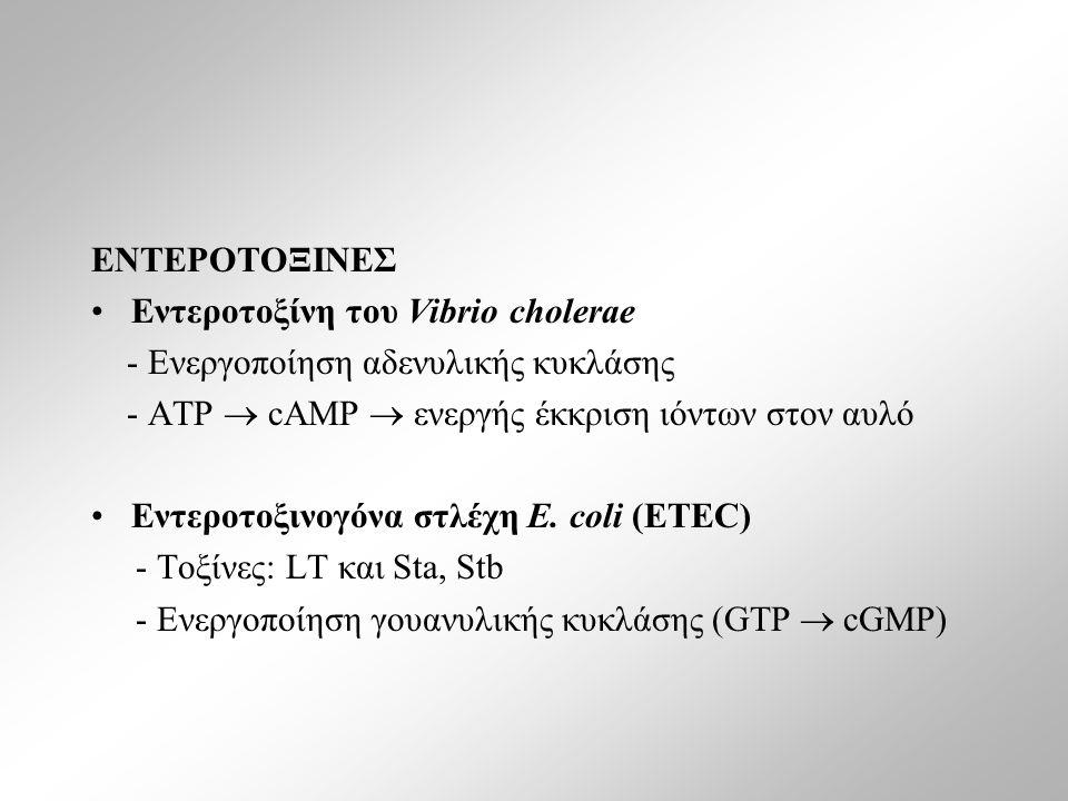ΕΝΤΕΡΟΤΟΞΙΝΕΣ Εντεροτοξίνη του Vibrio cholerae - Ενεργοποίηση αδενυλικής κυκλάσης - ATP  cAMP  ενεργής έκκριση ιόντων στον αυλό Εντεροτοξινογόνα στλέχη E.