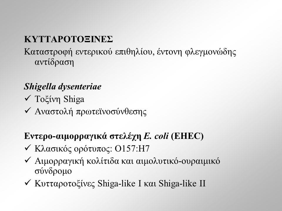 ΚΥΤΤΑΡΟΤΟΞΙΝΕΣ Καταστροφή εντερικού επιθηλίου, έντονη φλεγμονώδης αντίδραση Shigella dysenteriae Τοξίνη Shiga Αναστολή πρωτεϊνοσύνθεσης Εντερο-αιμορραγικά στελέχη E.
