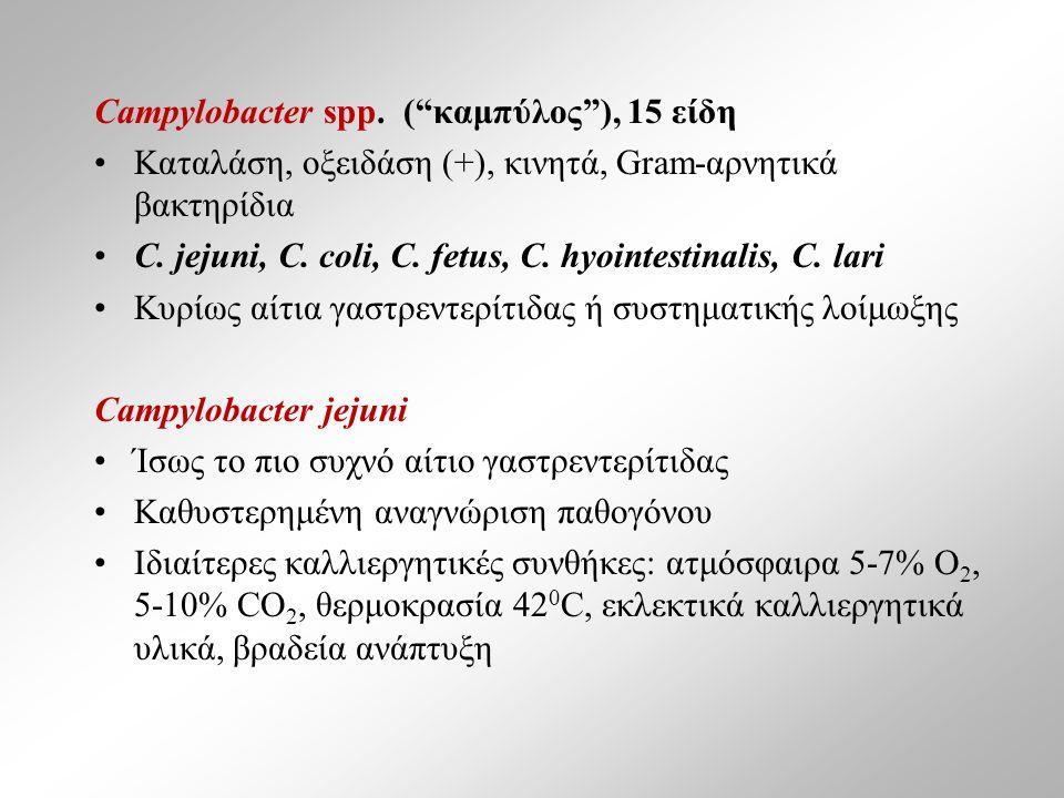 Campylobacter spp.