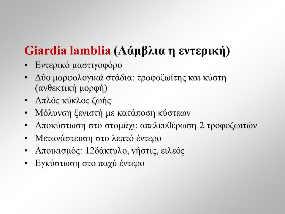 Giardia lamblia (Λάμβλια η εντερική) Εντερικό μαστιγοφόρο Δύο μορφολογικά στάδια: τροφοζωίτης και κύστη (ανθεκτική μορφή) Απλός κύκλος ζωής Μόλυνση ξενιστή με κατάποση κύστεων Αποκύστωση στο στομάχι: απελευθέρωση 2 τροφοζωιτών Μετανάστευση στο λεπτό έντερο Αποικισμός: 12δάκτυλο, νήστις, ειλεός Εγκύστωση στο παχύ έντερο