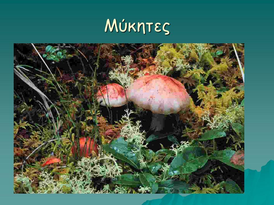 Μύκητες