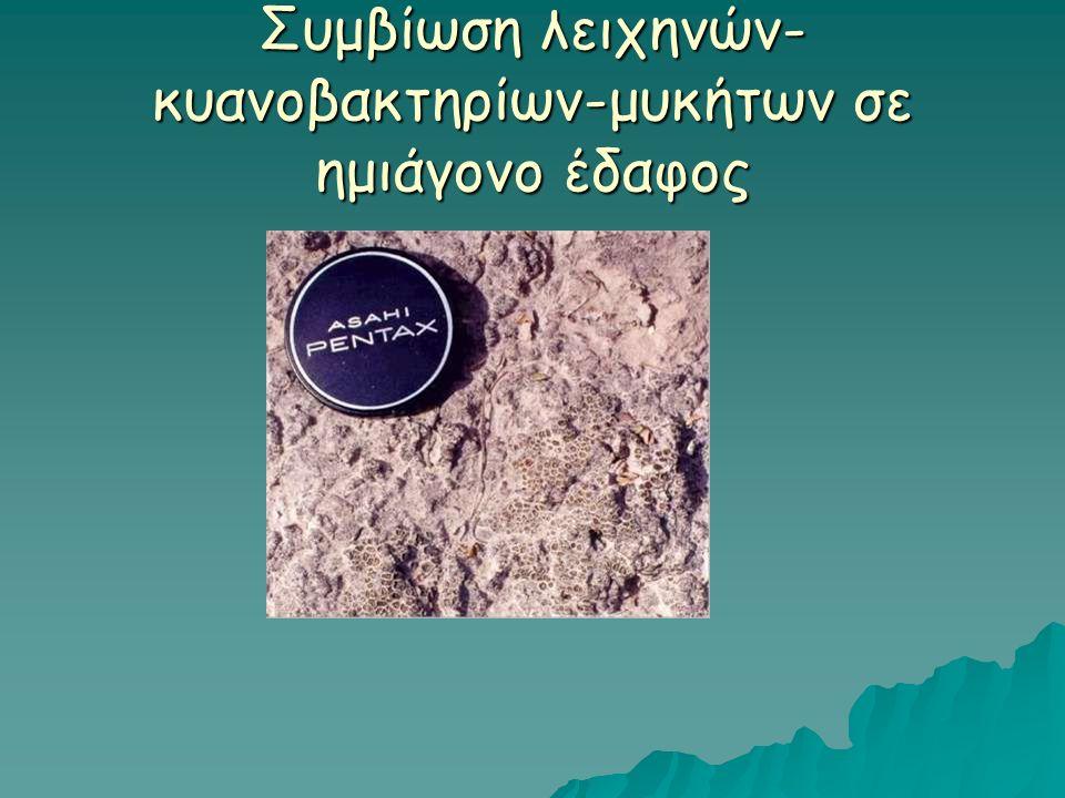Συμβίωση λειχηνών- κυανοβακτηρίων-μυκήτων σε ημιάγονο έδαφος