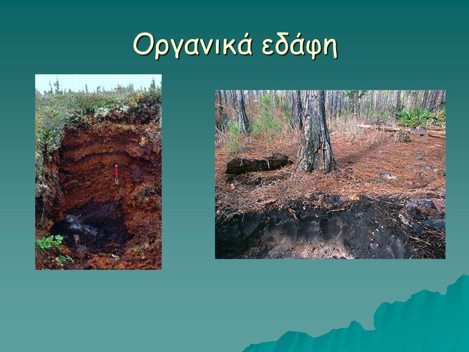 Οι μικροοργανισμοί του εδάφους  Βακτήρια, πρωτόζωα, μύκητες φύκη  Η παρουσία τους εξαρτάται από: τον τύπο του εδάφους, εποχιακή διακύμανση, βάθος, θερμοκρασία, υγρασία κ.α.