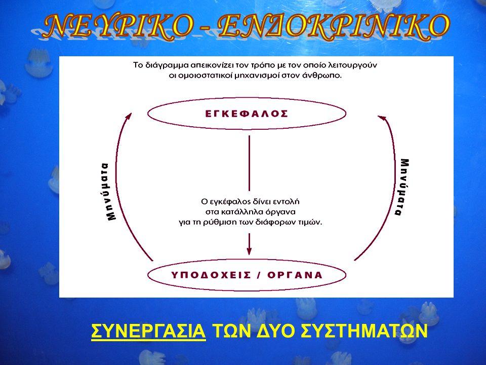 Τι χρειάζεται να ρυθμιστεί στον ανθρώπινο οργανισμό; Θερμοκρασία - δέρμα Ποσότητα Οξυγόνου, διοξειδίου του άνθρακα - πνεύμονες PH – νεφροί Συγκέντρωση νερού - νεφροί Σάκχαρο (γλυκόζη του αίματος) - ήπαρ Ομοιόσταση: Η ικανότητα ενός οργανισμού να διατηρεί το εσωτερικό του περιβάλλον σταθερό ανεξάρτητα από τις εξωτερικές συνθήκες.