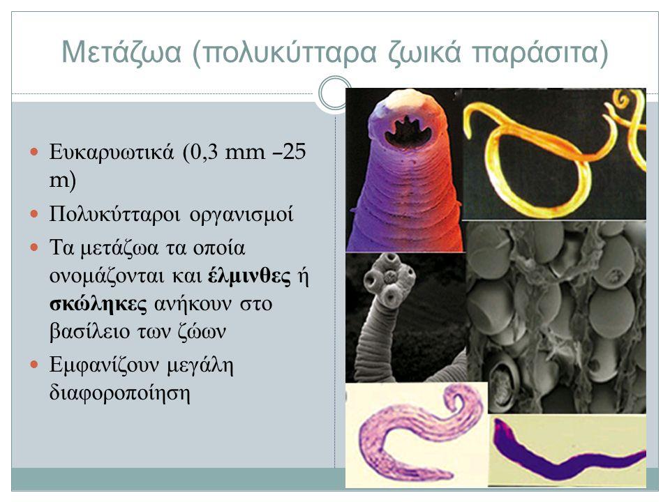Μετάζωα ( πολυκύτταρα ζωικά παράσιτα ) Ευκαρυωτικά (0,3 mm –25 m) Πολυκύτταροι οργανισμοί Τα μετάζωα τα οποία ονομάζονται και έλμινθες ή σκώληκες ανήκουν στο βασίλειο των ζώων Εμφανίζουν μεγάλη διαφοροποίηση