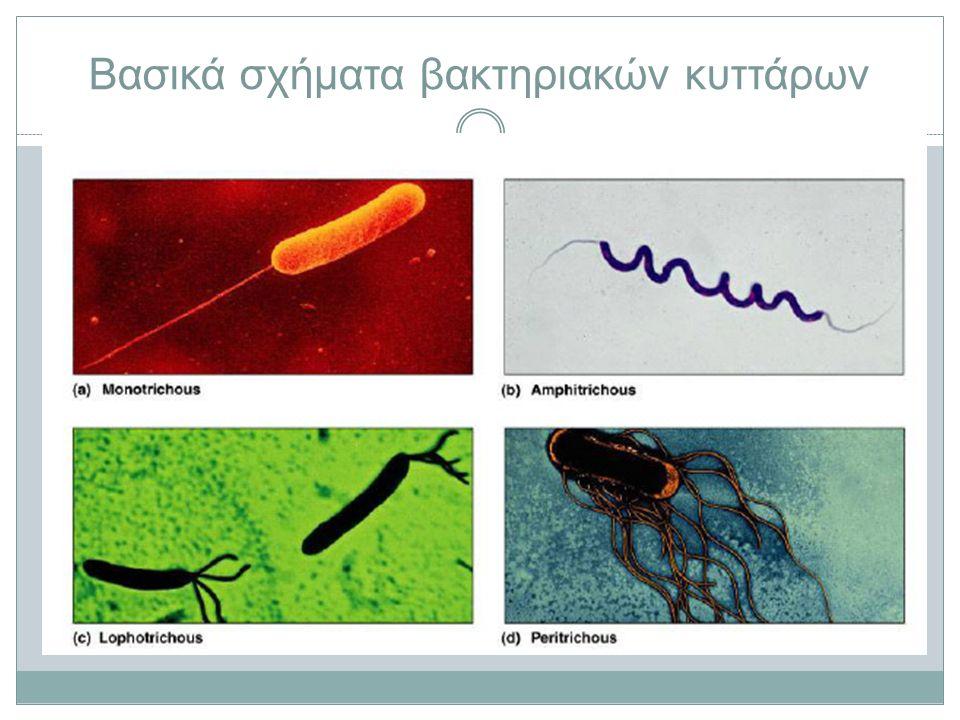 Βασικά σχήματα βακτηριακών κυττάρων