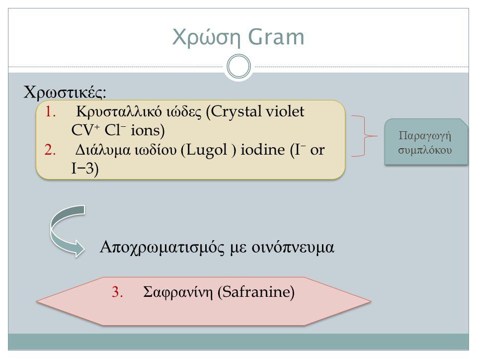 Χρώση Gram Χρωστικές : Αποχρωματισμός με οινόπνευμα 1.