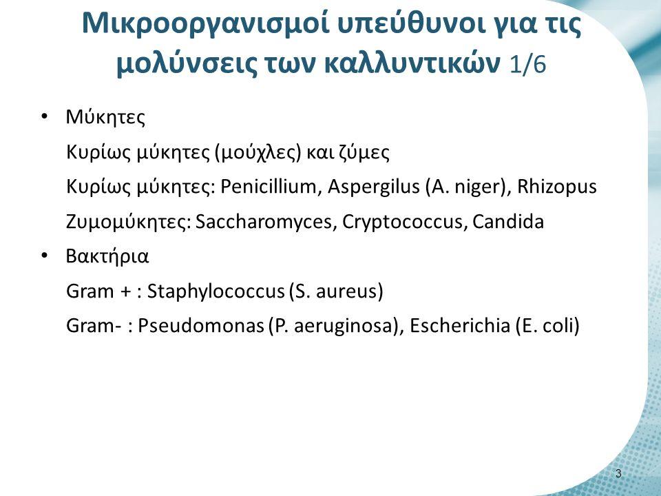 Μύκητες Κυρίως μύκητες (μούχλες) και ζύμες Κυρίως μύκητες: Penicillium, Aspergilus (A.