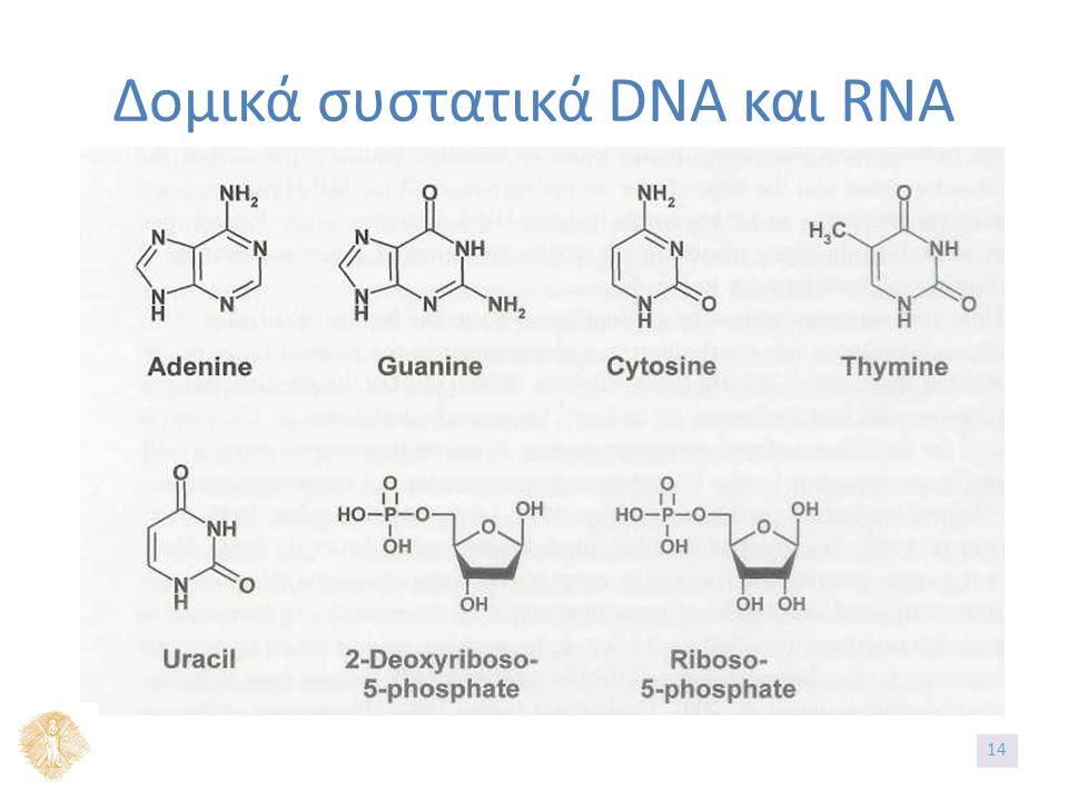 Δομικά συστατικά DNA και RNA 1414