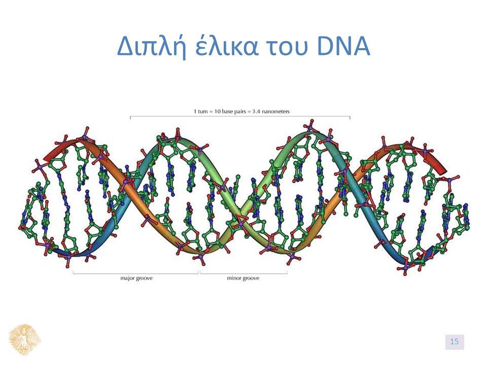 Διπλή έλικα του DNA 1515