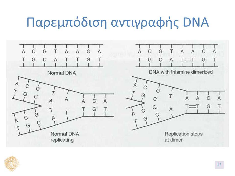 Παρεμπόδιση αντιγραφής DNA 17