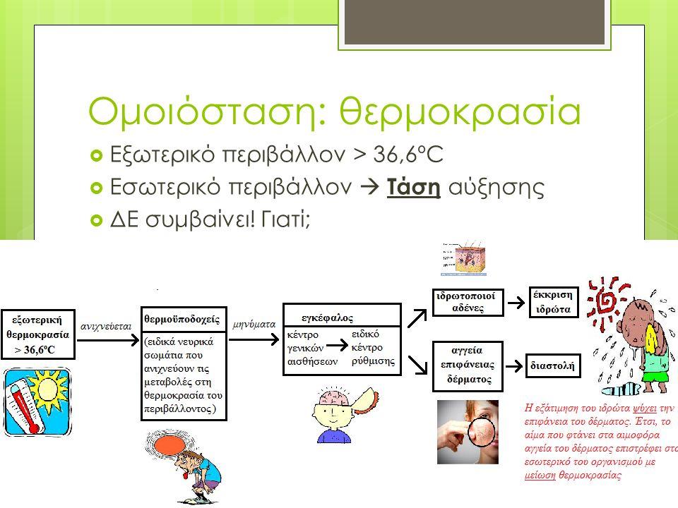 Μύκητες & ασθένειες  Μυκητιάσεις  Candida albicans (Κάντιντα η λευκάζουσα)  Πνευμονική καντιντίαση  Κολπίτιδα  Στοματίτιδα  Δερματόφυτα (=προσβάλλουν το δέρμα)  Τριχωτό κεφαλής & μεσοδακτύλιες περιοχές  Ερυθρότητα, κνησμός