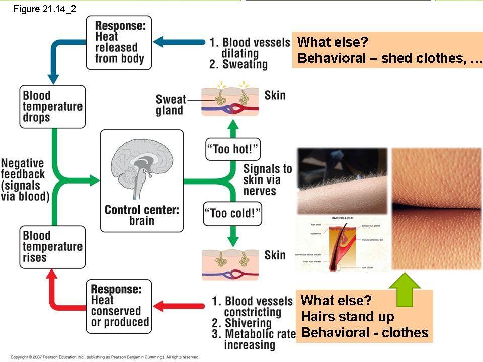 Βακτήρια  ΔΕ διαθέτουν οργανωμένο πυρήνα  Σχηματίζουν ΑΠΟΙΚΙΕΣ  Σχήμα  Ελικοειδές (σπειρύλλια)  Σφαιρικό (κόκκοι)  Ραβδοειδές (βάκιλλοι)