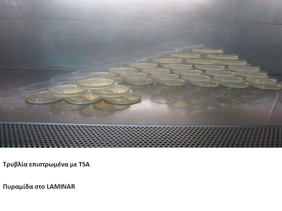 Τρυβλία επιστρωμένα με TSA Πυραμίδα στο LAMINAR