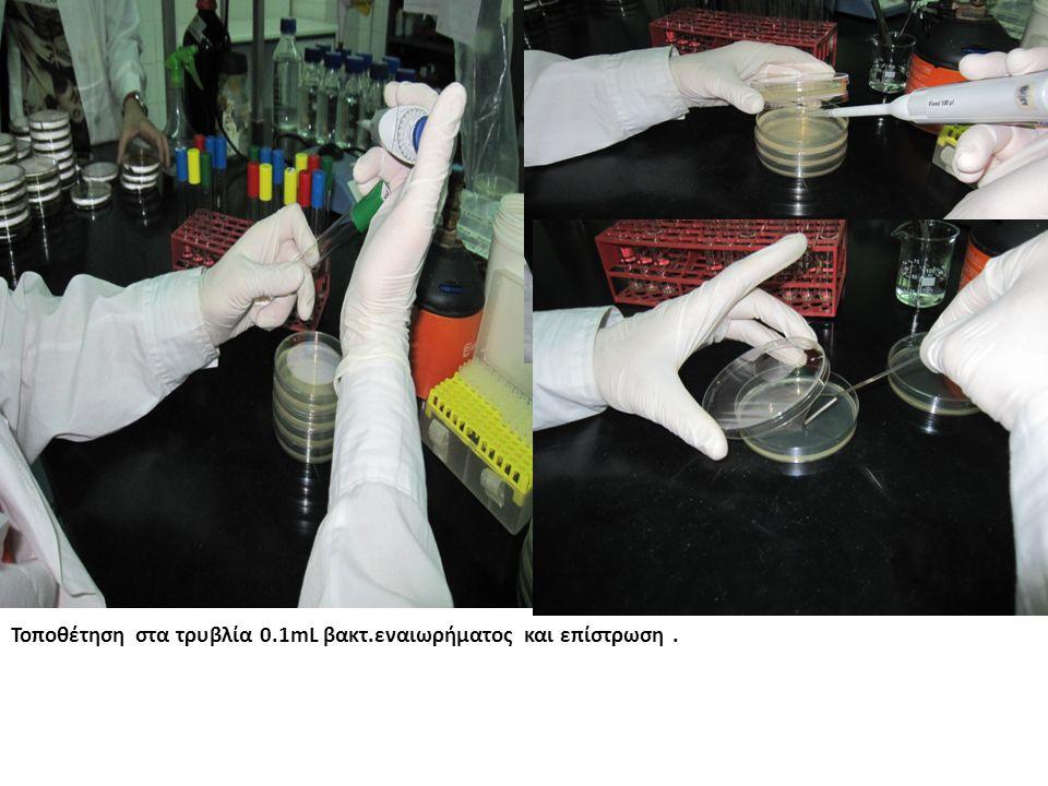 Τοποθέτηση στα τρυβλία 0.1mL βακτ.εναιωρήματος και επίστρωση.