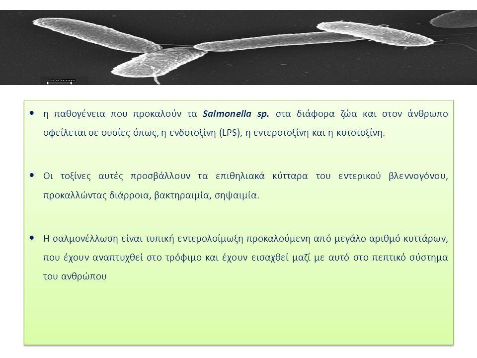 η παθογένεια που προκαλούν τα Salmonella sp.