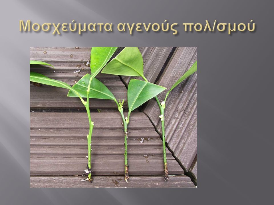 Η Μέθοδος δεν έχει ιδιαίτερη πρακτική εφαρμογή λόγω μεγάλου αριθμού αποτυχημένων φυταρίων ( ξήρανση, προσβολή ασθενειών ) Είχε καλά αποτελέσματα σε μονοεμβρυονικά είδη.