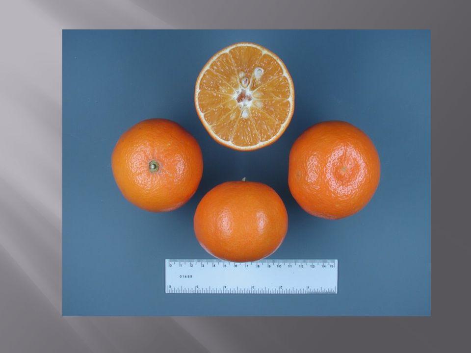  Δέντρα μεγάλου μεγέθους  Καρποί μικρού μεγέθους και καλής ποιότητας  Καθυστέρηση εισόδου στην καρποφορία  Αντοχή σε ασβέστιο, άλατα, βόριο και ψύχος  Μετρία αντοχή σε τριστέτσα και εξωκόρτη  Ανθεκτική στο Phytopthora  Ευαισθησία στους νηματώδεις  Κατάλληλο υποκείμενο για τη λεμονιά
