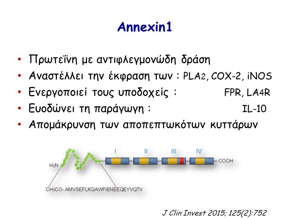 Annexin1 Πρωτεΐνη με αντιφλεγμονώδη δράση Αναστέλλει την έκφραση των : PLA 2, COX-2, iNOS Ενεργοποιεί τους υποδοχείς : FPR, LA 4 R Ευοδώνει τη παράγωγη : IL-10 Απομάκρυνση των αποπεπτωκότων κυττάρων J Clin Invest 2015; 125(2):752