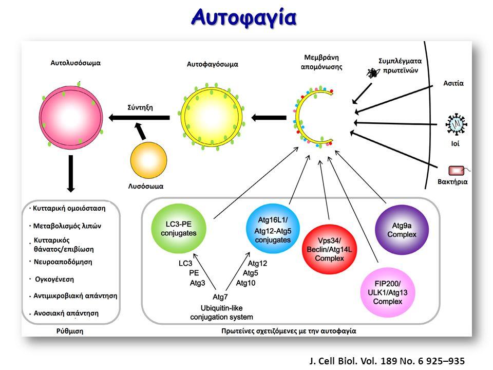 Αυτοφαγία J. Cell Biol. Vol. 189 No. 6 925–935
