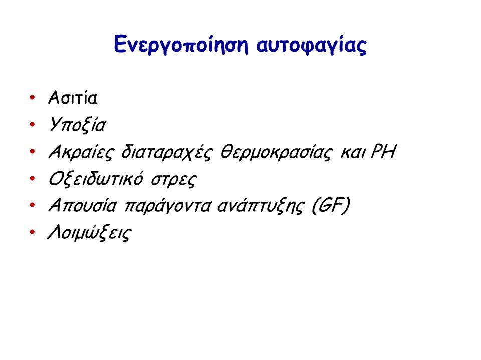 Ενεργοποίηση αυτοφαγίας Ασιτία Υποξία Ακραίες διαταραχές θερμοκρασίας και PH Οξειδωτικό στρες Απουσία παράγοντα ανάπτυξης (GF) Λοιμώξεις