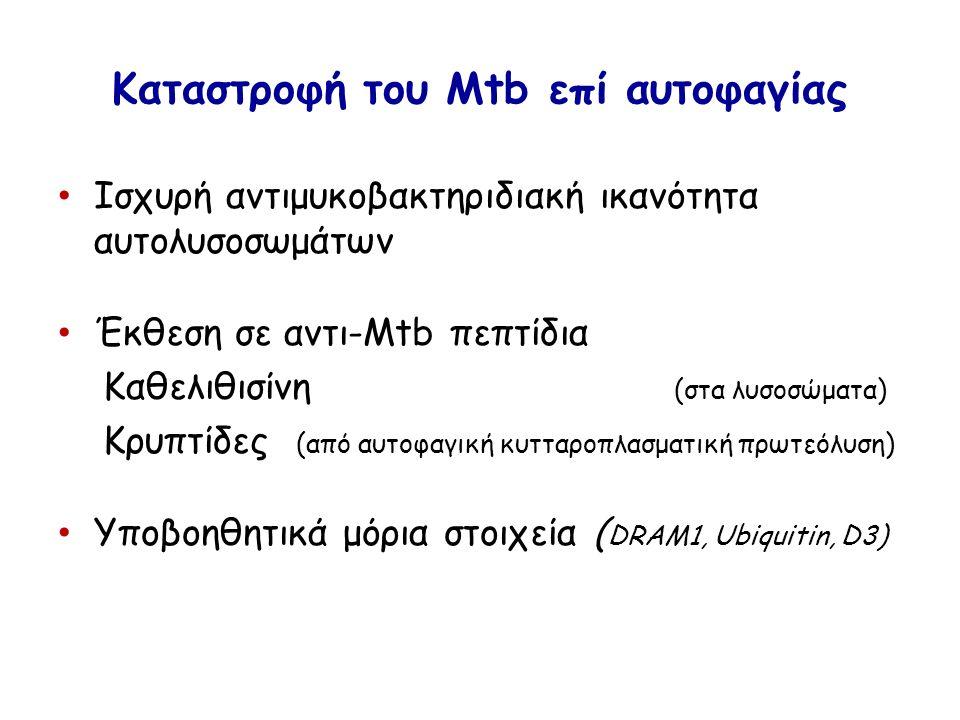 Kαταστροφή του Mtb επί αυτοφαγίας Ισχυρή αντιμυκοβακτηριδιακή ικανότητα αυτολυσοσωμάτων Έκθεση σε αντι-Mtb πεπτίδια Καθελιθισίνη (στα λυσοσώματα) Κρυπτίδες (από αυτοφαγική κυτταροπλασματική πρωτεόλυση) Υποβοηθητικά μόρια στοιχεία ( DRAM1, Ubiquitin, D3)