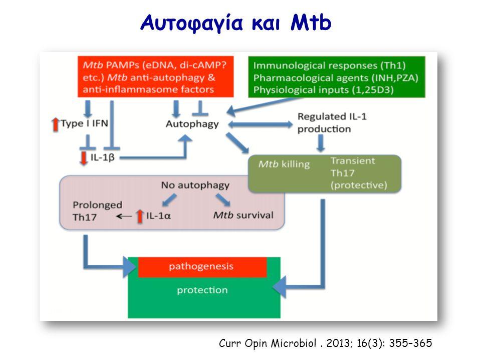 Αυτοφαγία και Mtb Curr Opin Microbiol. 2013; 16(3): 355–365