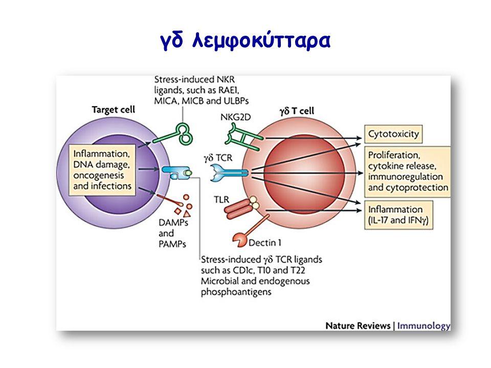 γδ λεμφοκύτταρα