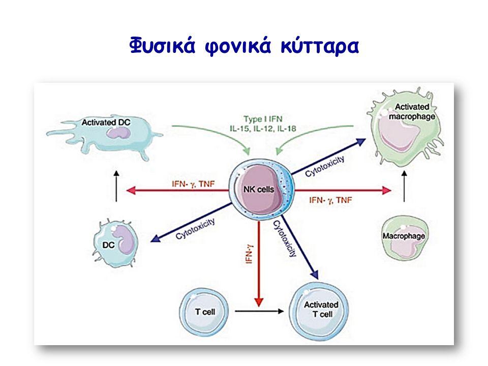 Φυσικά φονικά κύτταρα