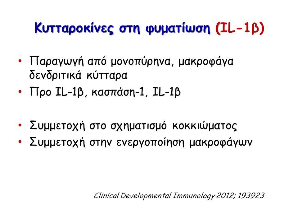 Κυτταροκίνες στη φυματίωση ( Κυτταροκίνες στη φυματίωση (IL-1β) Παραγωγή από μονοπύρηνα, μακροφάγα δενδριτικά κύτταρα Προ IL-1β, κασπάση-1, IL-1β Συμμετοχή στο σχηματισμό κοκκιώματος Συμμετοχή στην ενεργοποίηση μακροφάγων Clinical Developmental Immunology 2012; 193923